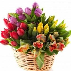 Большой букет из 51 ярких тюльпанов в корзине R163